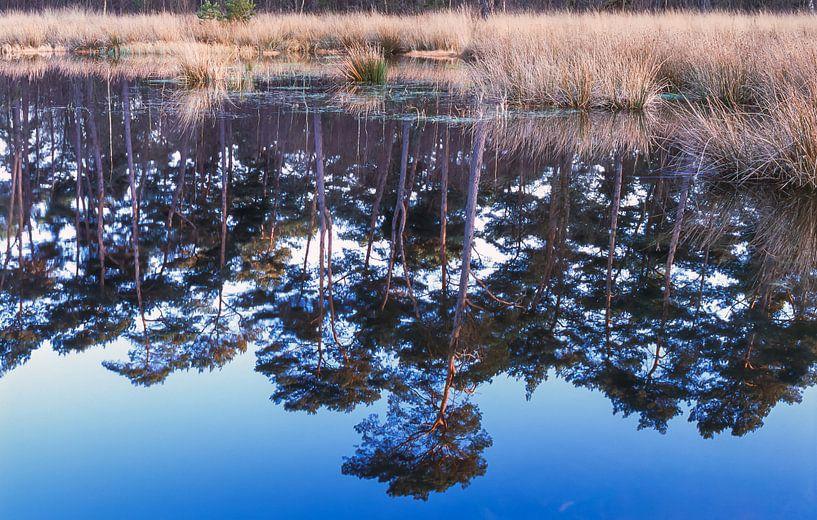 Groote Heide 3 van Desh amer