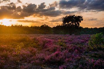 Sonnenuntergang auf Heideflächen von Laura Drijfhout