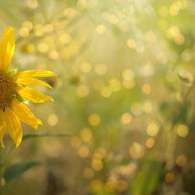 zonnig geel van zwergl 0611