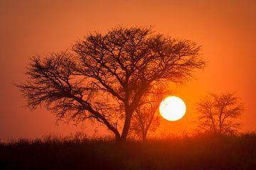 Sonnenaufgang in der Kalahari-Wüste von Chris Stenger