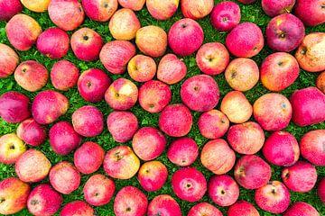 Partij rode appels uitgespreid op gras van Ben Schonewille