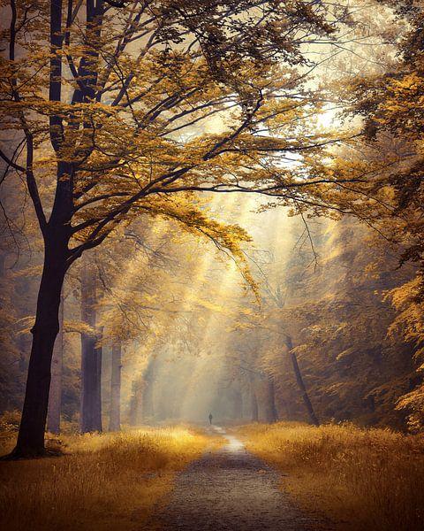 Forest of fortune van Rob Visser
