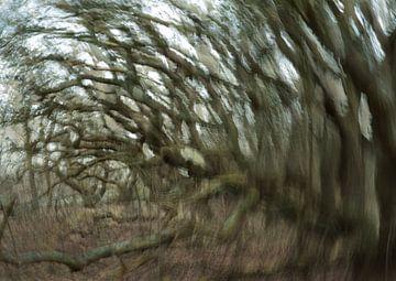 Wind 1 van Lein Kaland