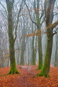 Herfst winter Speulderbos van Ad Jekel