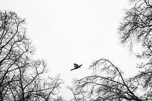 Kormoran fliegt von seinem Ruheplatz weg