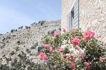 Bloeiende roze rozen naast Mediterraans huis van Melissa Peltenburg