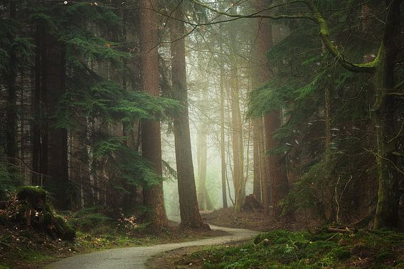 Mystical path van Roelie Steinmann