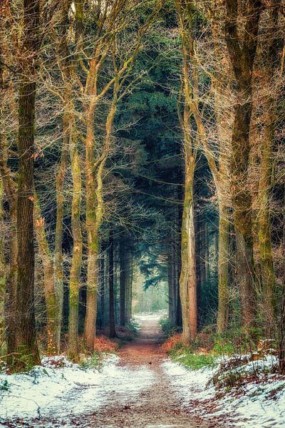 Weg durch Bergherbos von Tim Abeln