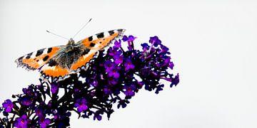 Vlinder op vlinderstruik van Sense Photography