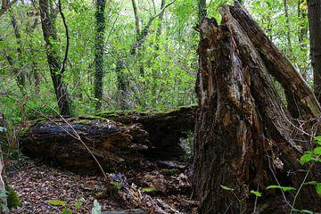 Bomen in bos von Sharida Mohaboe