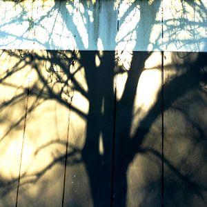 Tree Magic 12