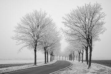 Winterstimmung von Keith Wilson Photography
