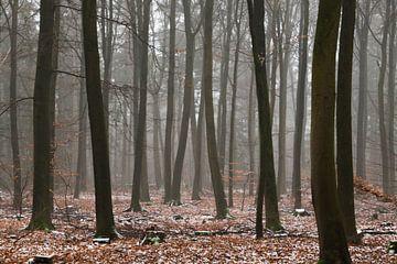 Winter auf der Veluwe von Kelvin Middelink