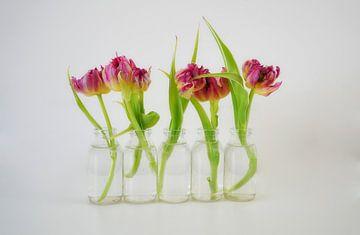 Tulpen van Hans Heemsbergen