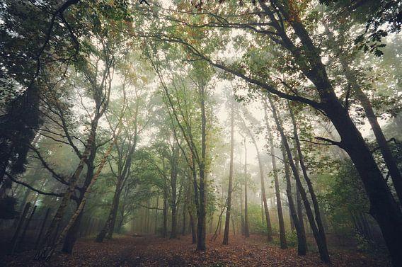 Landschap - Mistige ochtend van Angelique Brunas