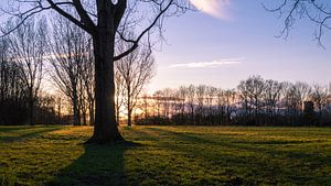 Schaduw achter boom bij zonsondergang