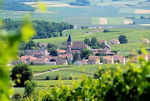 Frankrijk - Champagne / Ville-Dommange