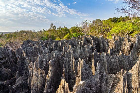 Rotsen in de Petit Tsingy de Bemaraha van Dennis van de Water