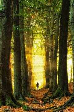Wandel ins Licht, Konigslaan Veluwe von Lars van de Goor
