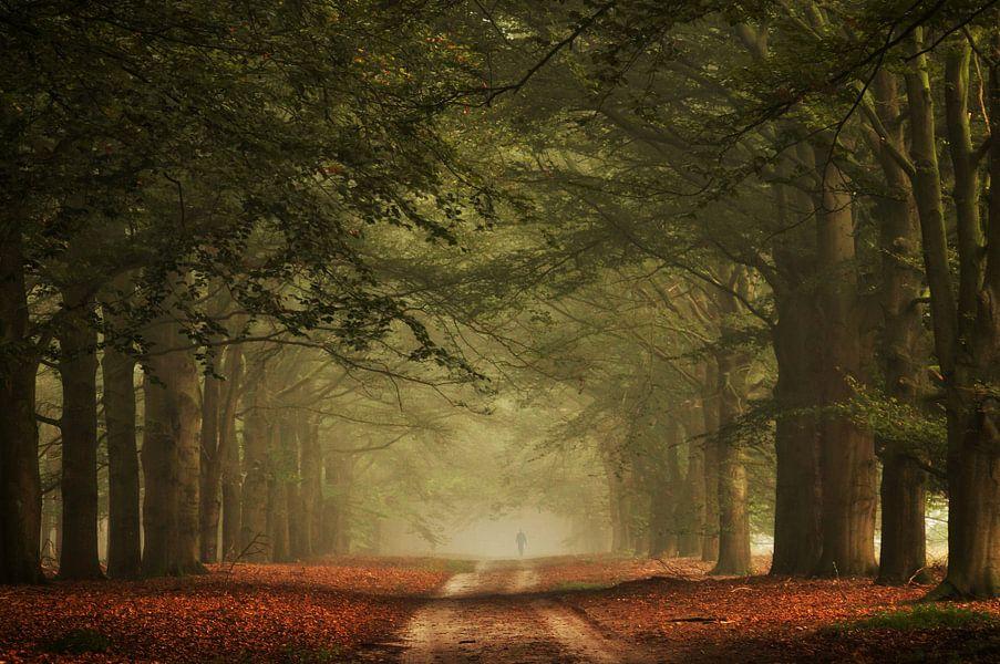 Misty Walk van Martin Podt