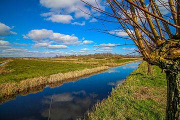 Landschap van een knotwilg bij een sloot in Giethoorn. van Maarten Salverda