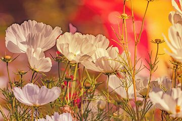 Blumen-Traum 8 von Marcel Kieffer