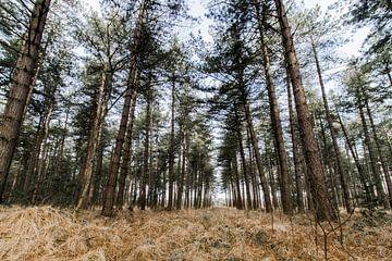 Kalmthoutse Heide van Ellen Rombouts