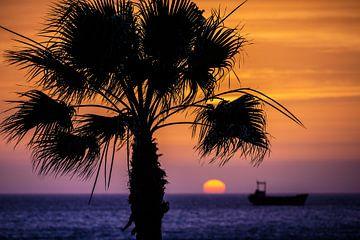 palmboom met zonsondergang van Erik Jansen