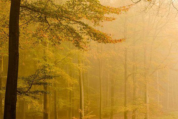Goud gekleurde herfst bomen