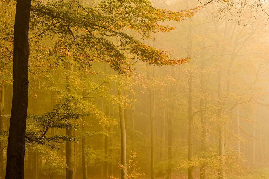 Goud gekleurde herfst bomen van Sjoerd van der Wal