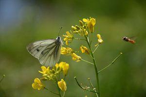 vlinder Arboretum Assen