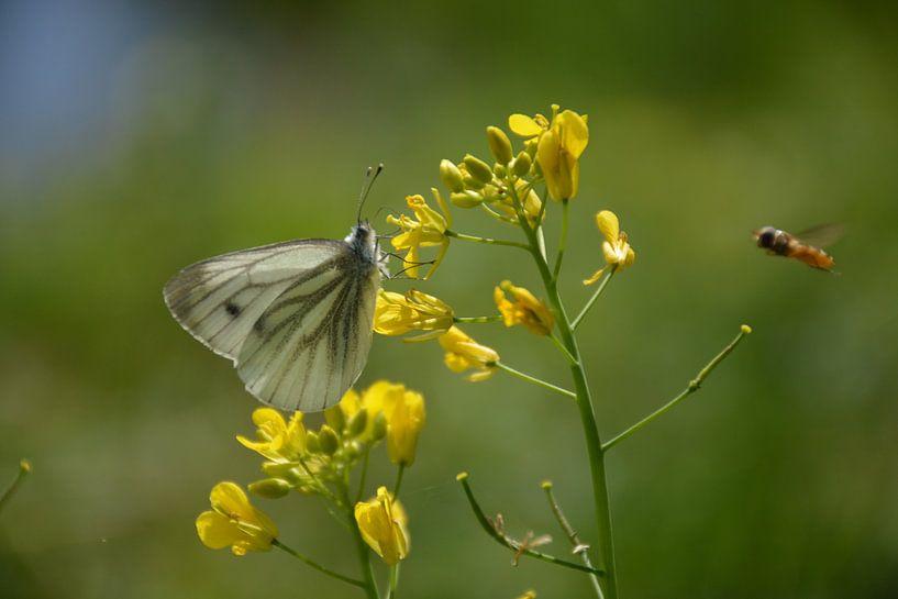 vlinder Arboretum Assen van Henriette Tischler van Sleen