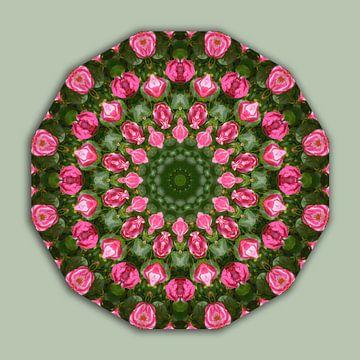 Roses, Flower Mandala, Floral mandala-style van Barbara Hilmer-Schroeer