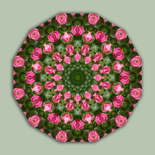 Roses, Flower Mandala, Floral mandala-style