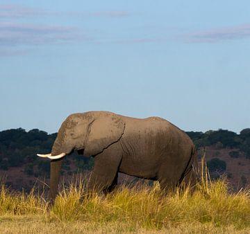 Portret van een olifant van Christel Nouwens- Lambers