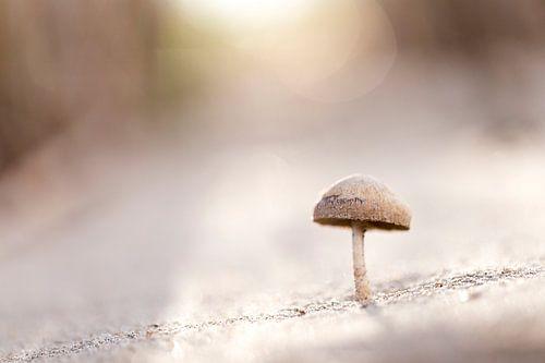 Een paddenstoeltje in het eerste zonlicht van de dag