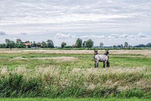 Dutch polder van