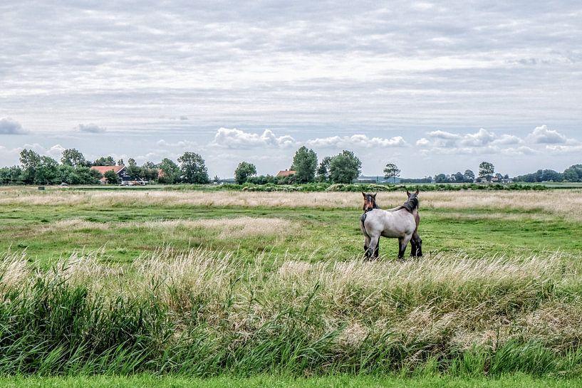 Dutch polder van Wessel Krul