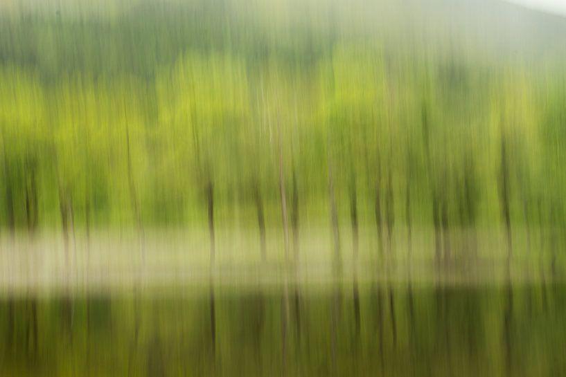 Bomen aan de rand van Loch Lubnaig, Schotland van Johan Zwarthoed