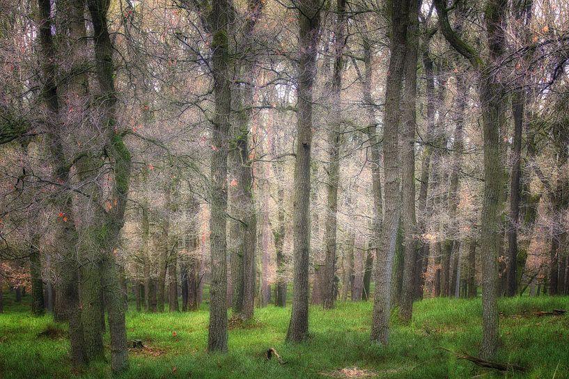 The Magical Forest lll van Rigo Meens