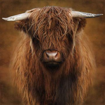 Highlander von Marja van den Hurk