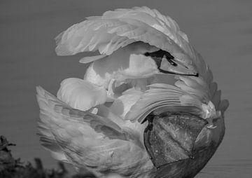 Schwan - schwarz-weiß von Karen de Geus