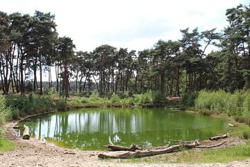 Groen meertje in de Nederlandse natuur von Nienke van den Brink