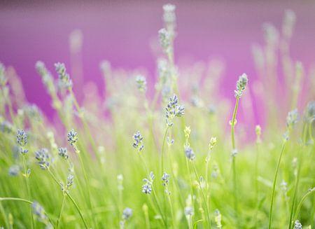 high key flowers