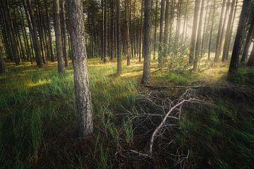 Der gefallene Zweig von Joris Pannemans - Loris Photography