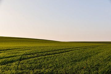 Grasveld van Driek Steegmans