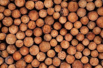 Stapels, stapels boomstammen (naaldhout) van