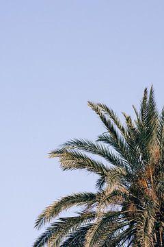 Gouden palm (verticaal) van Daniel Houben