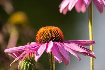 bloeien van Tomas S.