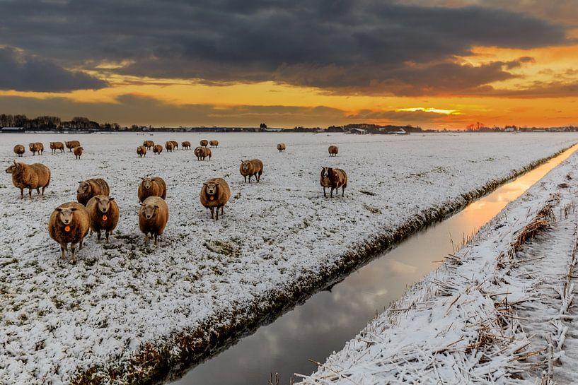 Schapen,  sneeuw, donkere wolken en een opkomende zon van Remco Bosshard